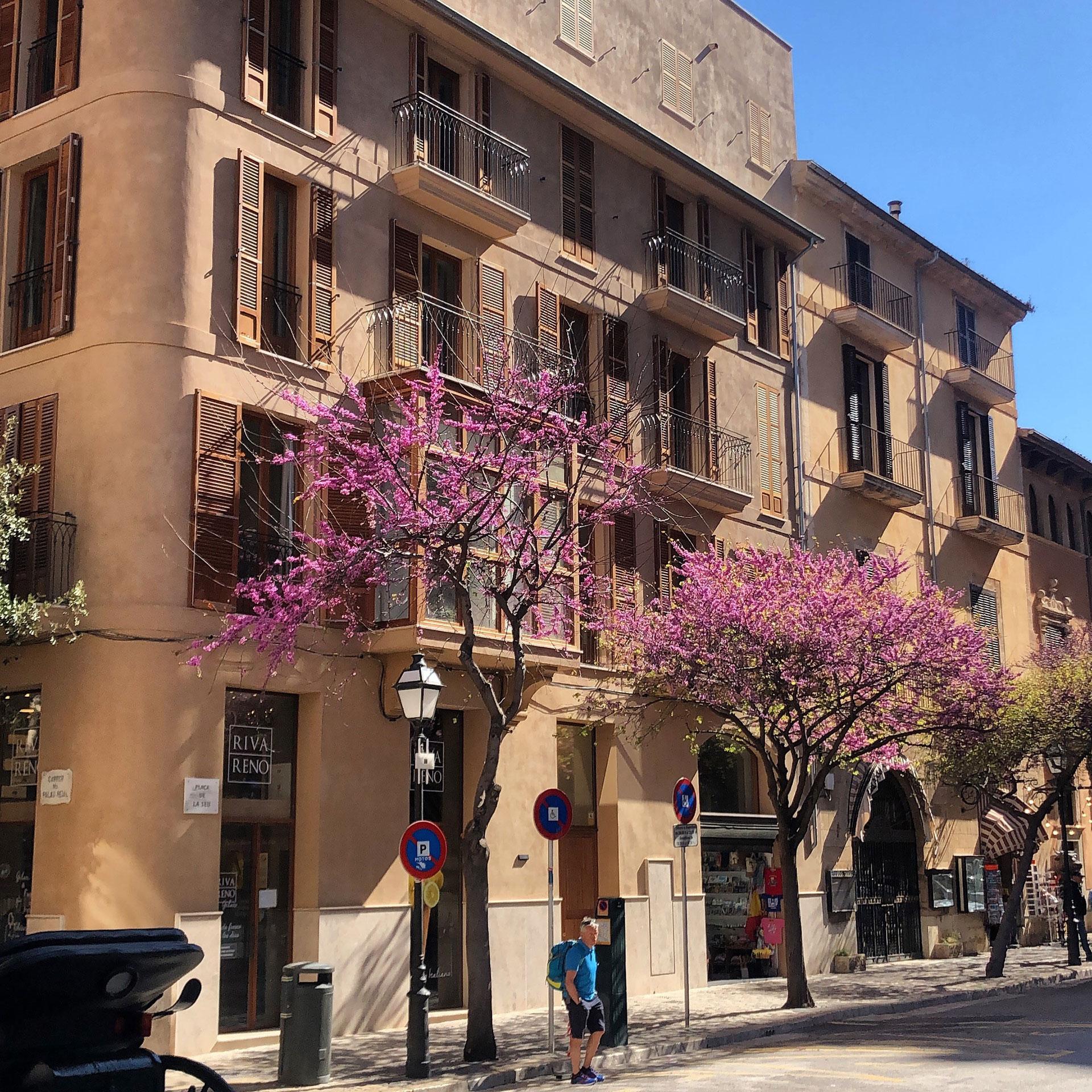 Proyecto Plurifamiliar, Edificio Palau Real | CBR